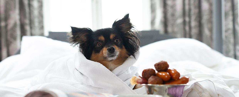 Hund på malmö arena hotel